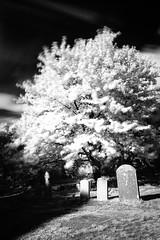At Rest (Paul Timlett) Tags: shrewton leicaq rollestonechurch infrared church wiltshire bnw blackwhite graveyard