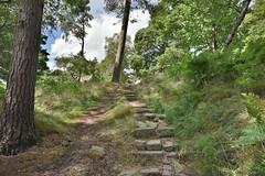 Path to Stanage Edge (Bri_J) Tags: stanageedge peakdistrict nationalpark hathersage derbyshire uk countryside nikon d7200 hdr steps trees path