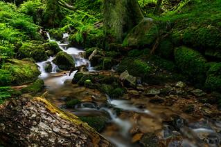 Wiese zufluss / Wiese tributary
