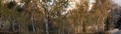 NAT.V wip 03 (l00ping) Tags: skyrim special edition se natural atmospheric tamriel nat lighting weather