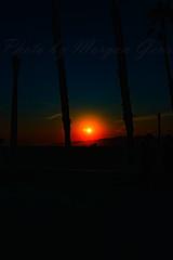 06 (morgan@morgangenser.com) Tags: sunset red orangeyellow blue pretty cloud silhouette sun evening dusk palmtrees bikepath sand beach santamonica pacificpalisades beautiful black dark cement amazing gorgeous inawe ca photobymorgangenser