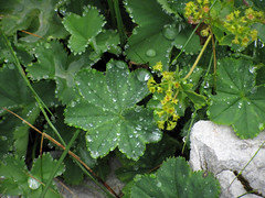 Jutranja rosa / Morning dew (Damijan P.) Tags: hribi gore mountains hiking slovenija slovenia ksa kamniškosavinsjkealpe kamniksavinjaalps velikivrh velikazelenica križevnik prosenak