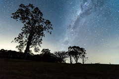 The Milky Way and Rural Landscape (Merrillie) Tags: night glitter landscape winter astrophotography australia rural newsouthwales astro paddock nsw country astronomy outside silhouettes trees astrology milkyway sky tree nightsky stars outdoors gresford