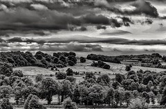 Nature in B+W (LeanneHall3 :-)) Tags: blackandwhite mono countryside fields trees leaves branches sky skyscape clouds talkativeclouds cloudsstormssunsetssunrises landscape canon 1300d groupenuagesetciel