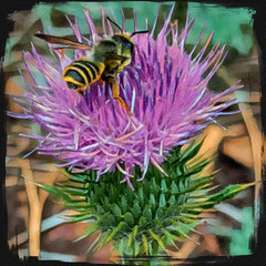 T 00006a Bee on Thistle. (edit.quill) Tags: bee pollinator insect thistle wildflower arizona outdoors nature southwest purple