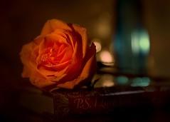 The Rose (johnsinclair8888) Tags: sliderssunday rose tabletop johndavis tamron d750 dof bokeh candlelight book flower art glow bottles blue reflection 2470 waterdrop