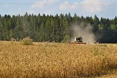 DSC_0280 (anetaležáková) Tags: summer sunset summerharvest sunnydays harvest agriculture agriphoto czechagri caseihpuma case casepuma165 caseoptum casepuma200 claas claaslexion newholland