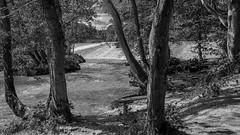 below the calver weir b:w (Royston King) Tags: calverweir monochrome waterfalls peakdistrict derbyshire xt2