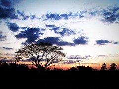 landscape sunset silhouette tree (www.icon0.com) Tags: tree black hope outdoor openair wallpaper natural agriculture green storm spring cloud silence serenity view peace lively horizon night orange summer gloomy farm dusk away dark season climate lonely plain color blue weather beauty sunset rural sky country scene beautiful background silhouette branch nature single environment alone landscape hot