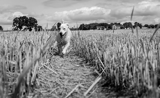 In the fields with Doris .