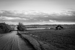 Green Fields and Country Road (Matt 23998) Tags: blackandwhite sunset bw blackwhite canada lake evening weathered clouds rural sun summer abandoned barn monochrome derelict country alberta dilapidated deserted farm farmstead decay sunbeam field