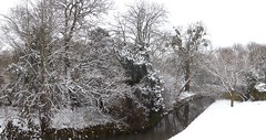 Snow, Monks Brook (archive2_) Tags: best archive2 monks brook monksbrook tree trees