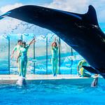Jump! At the Dolphins and Sea Lions Show of Enoshima Aquarium, Fujisawa : イルカとアシカのショー(新江ノ島水族館) thumbnail
