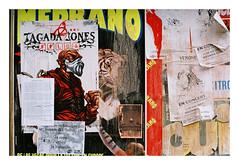 1. 05540019 (Jordane Prestrot) Tags: jordaneprestrot film filmisnotdead analog argentique argéntico película pentaxp30 ♋ toulouse tiger tigre