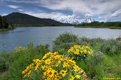Oxbow Bend (walkerross42) Tags: arrowleafbalsamroot wildflowers oxbowbend river mountains grandteton nationalpark wyoming snakeriver