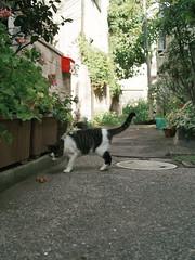 neko-neko2174 (kuro-gin) Tags: cat cats animal japan snap street straycat 猫 sigma dp2