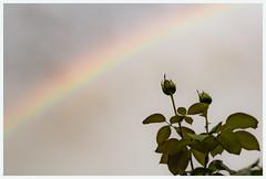 fragile (i.v.a.n.k.a) Tags: ivanadorn ivana ivanahesova sonyalpha rainbow colours light sky fragility fragile metaphor nature flower