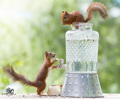 red squirrels standing with a water tap and kettle (Geert Weggen) Tags: environmentalissues squirrel animal backgrounds bright cheerful closeup colorimage conceptstopics cute day environment environmentalconservation environmentaldamage flower fragility global horizontal humor ideas land lightnaturalphenomenon loveemotion mammal nature newlife nopeople perennial photography planetspace planetearth plant pollution red rodent socialissues springtime summer sun sweden wateringcan water tap drink wet drop cup kettle bispgården jämtland geert weggen ragunda