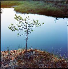*** (Ordinary Extraordinary World) Tags: 6x6 400 analog bog bronicasqai film estonia format medium mediumformat mf nature portra kodak zenzanonps square raba
