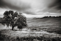 San Quirico, Tuscany (Daryl Luk) Tags: italy sanquirico tuscany country summer cloudy slowshutter morning flowers slope valley blackandwhite monochrome landscape blackwhite
