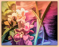 I dream of painting and then I paint my dream. (Vincent Van Gogh) (boeckli) Tags: flora flowers orchids flower fleur orchideen orchid orchidsbythesea bunt farbig farbenfroh colourful colorful colours colors photoborder topaz topazstudio plants pflanzen rx100m6 001215