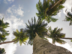 Perspective. (raj4tshenoy) Tags: photography andaman islands trees perspective sunny summer