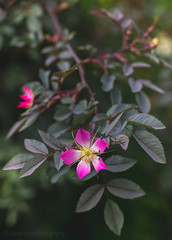 Tomorrow's Today. (Jeana Marie Photography) Tags: 50mm flowers plants nature landscape photography gardens canon 7dmii uk united love summertime 2018 explore