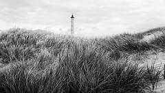 Swaying Grass (Maike B) Tags: lyngvigfyr hvidesande denmark danmark dänemark nordsee leuchtturm strandgras wind marramgrass strandhafer monochrome