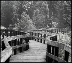 Nature Scape (JB_Atlanta) Tags: alternateprocessing augusta augustaga bw candid fence forest georgia nature phinizyswampnaturecenter trail unitedstates us