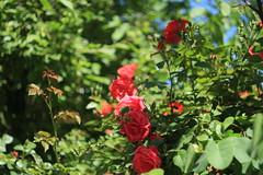 IMG_8330 (martaadves) Tags: people girls nature crimea sevastopol green flowers