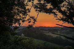 Coucher de soleil sur les vignes. (mariechristinearbeloa64) Tags: vignoble champs colline bois verdure arbres couleurs embrasement