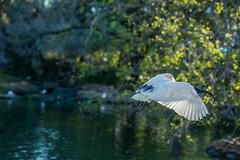 DSC00270 (Damir Govorcin Photography) Tags: sydney natural light burwood park sony a9 100mm stf lens