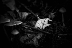 The Forest Floor (_Lionel_08) Tags: mushrooms black white grey leaf leaves sticks woods
