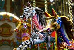 Carousel horses (and zebra!), #zslzoonights (Lady Goldie) Tags: zslzoonights zoo zsl london londonzoo animals wildlife carousel fairground carouselhorse zebra