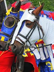 DSCF3903 (SierPinskiA) Tags: ruffordabbeycountrypark rufford knightsofnottingham fujixs1 jousting medieval horse knights goldeneagle falcon