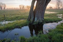 jgeenen-20180331-_IMG3187-HDR8 (jozefgeenen) Tags: gent landschap natuurreservaat ochtend open oudekale