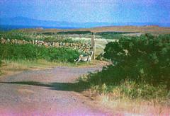 Image 29 (terrible_volk) Tags: film slide agfact100 rhosili beach cymru