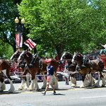 Budweiser Clydesdales thumbnail