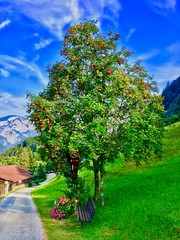 Trees, park bench and flowers along a hiking trail in Tyrol, Austria (UweBKK (α 77 on )) Tags: österreich austria tyrol tirol europe europa iphone trees park bench flowers green grass hiking trail path road sky blue