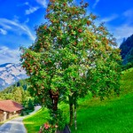 Trees, park bench and flowers along a hiking trail in Tyrol, Austria thumbnail