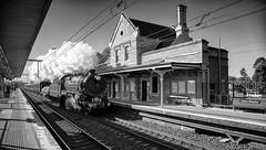 Emu Plains Express (SJB Rail) Tags: 3642 c36 steam trains emu plains railways railroads
