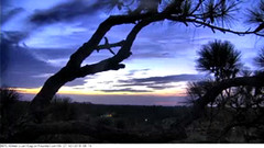 Tuesday sunrise in Northeast Florida (see update) (heights.18145) Tags: americaneaglefoundation romeo juliet eggs ccncby eagles