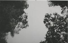 012.jpg (Tai Moura) Tags: film filme konica vx400 preto branco black white expired vencido olympustrip100r lomo lomography lomografia