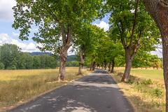 Mezná (RunningRalph) Tags: czechrepublic meznilouka mezná road tree hřensko ústeckýkraj tsjechië cz