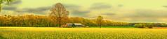 Rapsfeld (Hubert Demming) Tags: agriculture