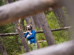 jasper 2017 045 (adamlucienroy) Tags: jasper jaspernationalpark nationalpark forest gh4 panasonic telephoto leica primelens prime 25mm f14 alberta edmonton yeg yegdt canada