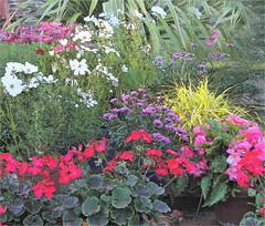 71500 my garden 3 Aug 18 v3_ Fsk pencil sk 3  10.120.20.210.200. (call me Michael) Tags: fotosketcher flower chaos garden mygarden