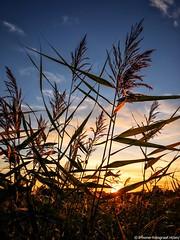 Sunset (iPhone Fotograaf) Tags: sunset evening sun iphone8plus dutch sky