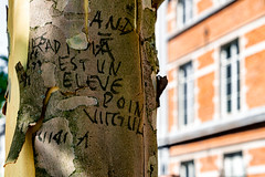 Luckily plane trees have a peeling tree bark... (devos.ch312) Tags: planetree peeling peelingtreebark plataan architecture brussels combinationarchitecturenature urbanview sony a7rii a7rm2 ilce7rm2 zeiss fe2470mmf4zaoss christinedevos