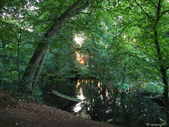 Im Park (michaelmueller410) Tags: bäume trees park schlos schloss garden evening abend sundown sunset sonnenuntergang wald see teich pond lake löhne ostwestfalen nrw germany ulenburg
